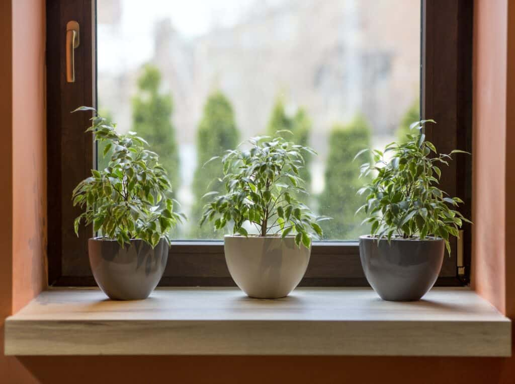 Herbs in plant pots growing on a windowsill in cafe interior
