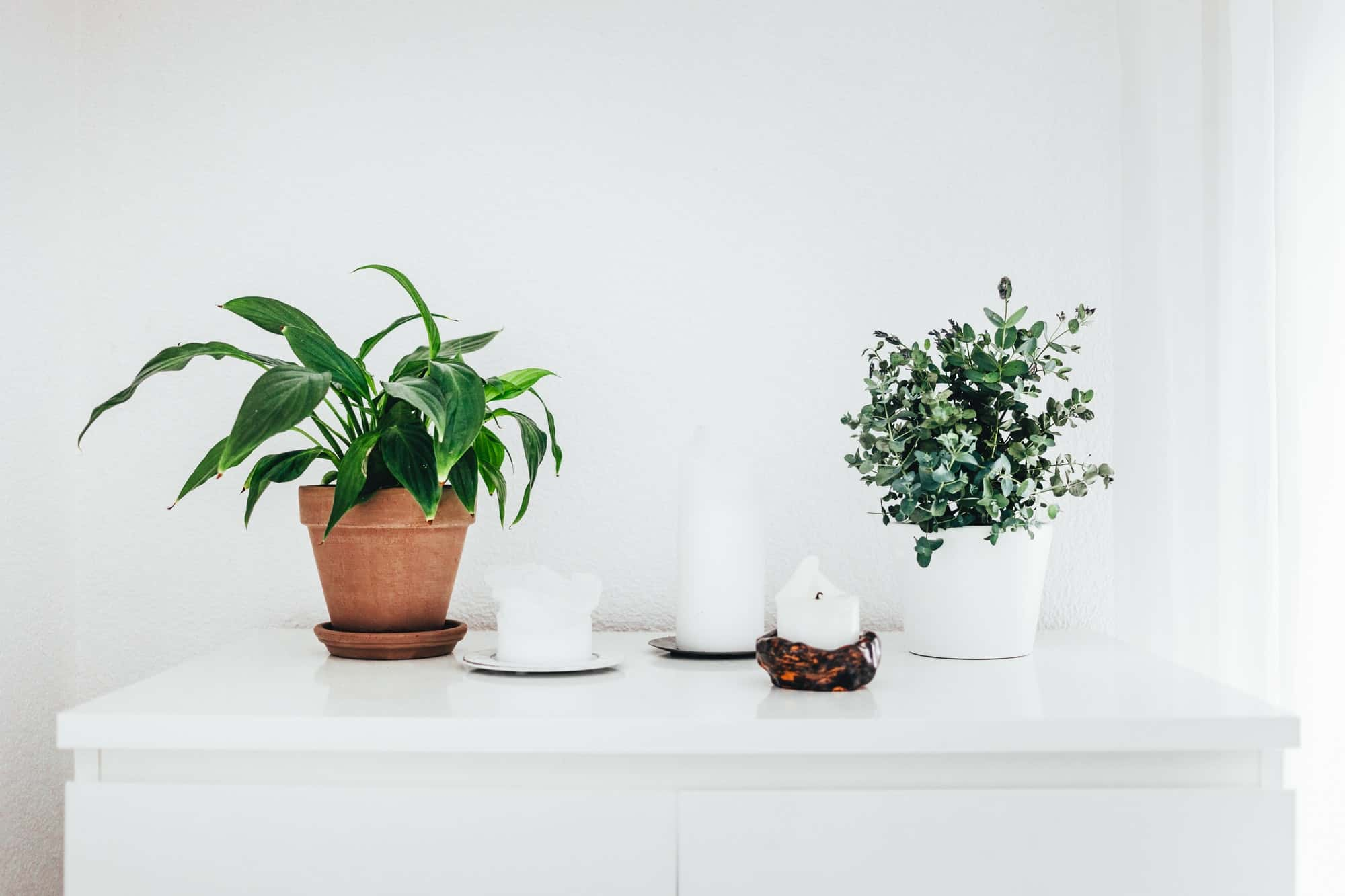Indoor plants on White Sideboard with White Candles
