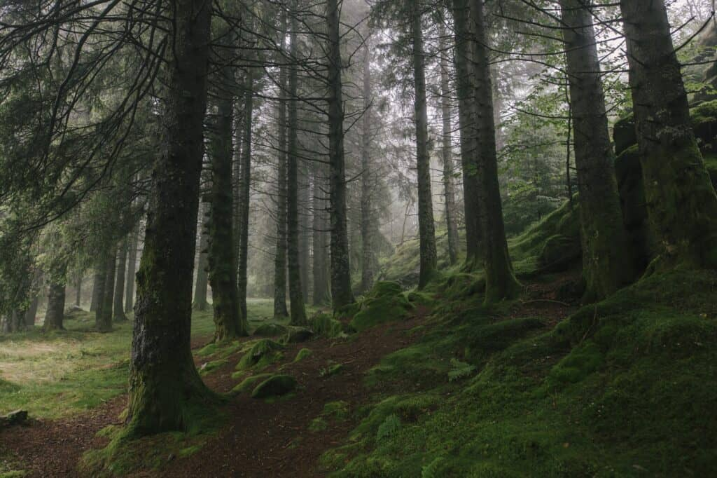 Moody Green Forest in Norway