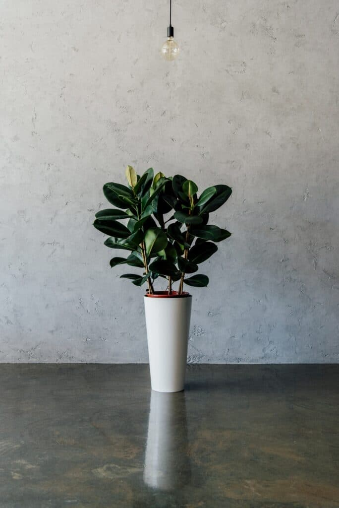 green potted plant in vase on the floor at empty room