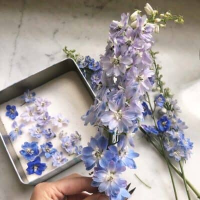 how to dry flowers in a microwave