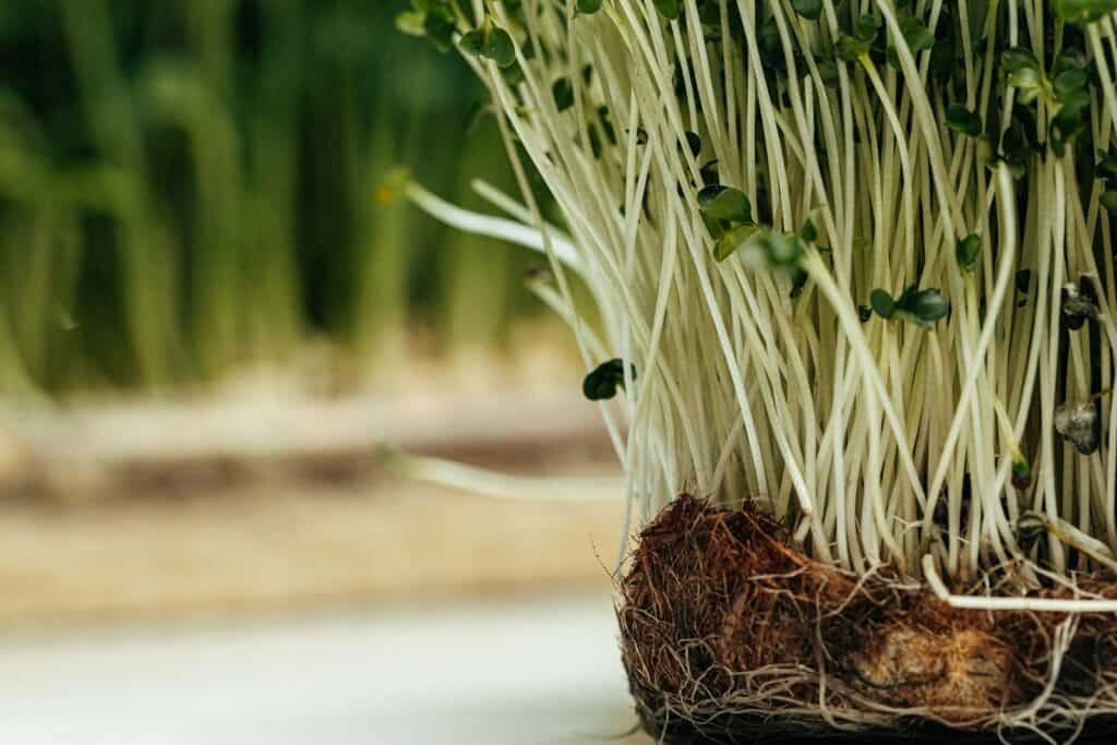 signs of root rot